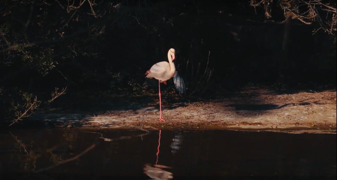 [Vidéo premiere] Undae Tropic – Extra Flores